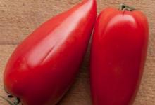 Ferme Philippin. Tomate andine cornue