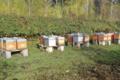 Gregory dussenne, apiculteur