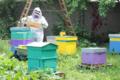 les mûres ont des abeilles