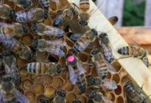 Les ruchers d'Alexandre