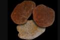 Pierre Chauvet. Collection noix et amande