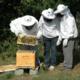 L'abeille de Ri