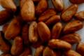Fèves de Cacao crues et lavées, Équateur