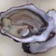 Huîtres Legris. Huîtres creuses n°3