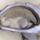 Huîtres Legris. Huîtres creuses n°2