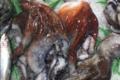 Poissonnerie Le Marlin. Poulpe de roche