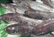 Poissonnerie Le Marlin