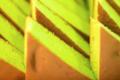 Pâtisserie de Saison. Triangle vert