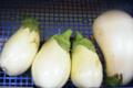 Willers-hof. aubergine blanche