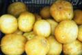 Willers-hof. Concombre lemon