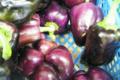 Willers-hof. Poivron violet