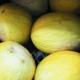 Willers-hof. Melon jaune