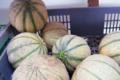 Willers-hof. melon