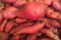 Le jardin de Marthe. Patate douce