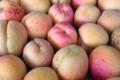 Le jardin de Marthe. Abricots