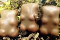 Chocolat Noisette. Ourson en guimauve