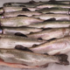 Aux Sources du Heimbach. Truite saumonée entière
