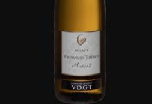 Domaine Laurent Vogt. Muscat vendanges tardives