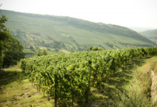 Domaine Mure Francis