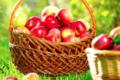 Ferme Fruitière du Kehlbach Zerr