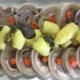 Tête de veau cuite avec son bouillon de cuisson et sa sauce gribiche