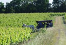 Domaine de Sainte-Anne