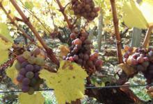 Vignoble Dessèvre - Domaine de Gatines
