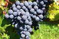 Domaine des hautes vignes