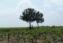 Domaine de Beauron