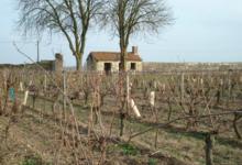 Domaine des Matines