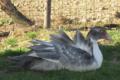 Foie gras du domaine