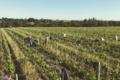 Vaillant Domaine Les Grandes Vignes