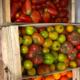 Les Jardins De Pimba. Tomates