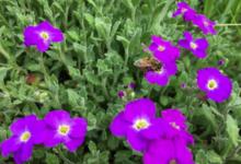 Rêve d'abeilles. Gaec Dugué