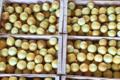 Le Cayre de Valjancelle. Concombres lemon