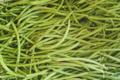 Le Cayre de Valjancelle. Haricot vert