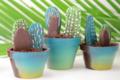 Chocolats Colas. Cactus