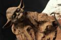 Sacrées Pâtisseries de Zoé Petit. Maitre Yoda