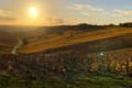 Champagne Domaine de Bichery