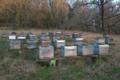 Les ruchers de l'Etoile