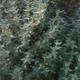Jardin du poirier. Thym