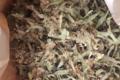 Les Herbes Folles. Winter
