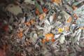 Les Herbes Folles. Vénus
