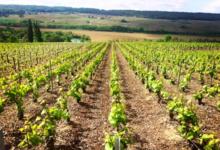 Champagne Jean Pierre Marniquet