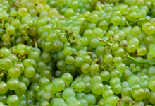 Champagne B. Hennequin