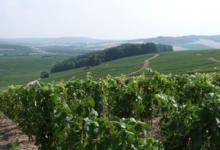Champagne Yves Ruffin, bio depuis 1971