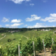 Champagne Locret-Lachaud