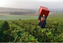 Champagne Laurent Grais