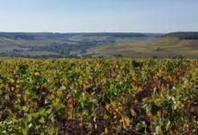 Champagne Boonen-Meunier Fils
