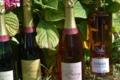 Champagne Bierry Père et Fils. Brut rosé